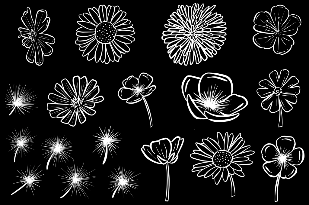 Black and White Wildflower Cartoon Illustration Collection by Squeeb Creative