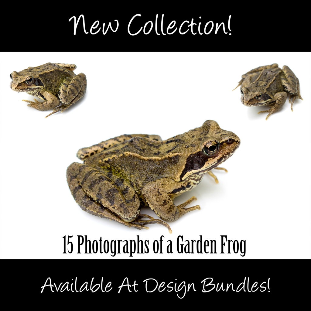 Common Garden Frog Photography Collection Squeeb Creative