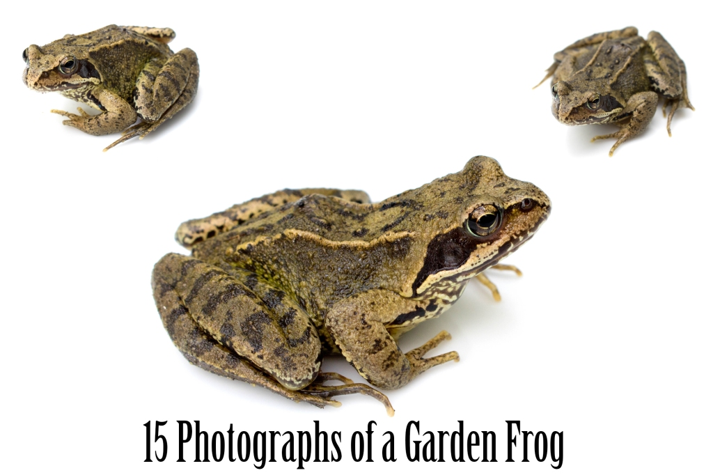 Common Garden Frog Photography Download Collection by Squeeb Creative