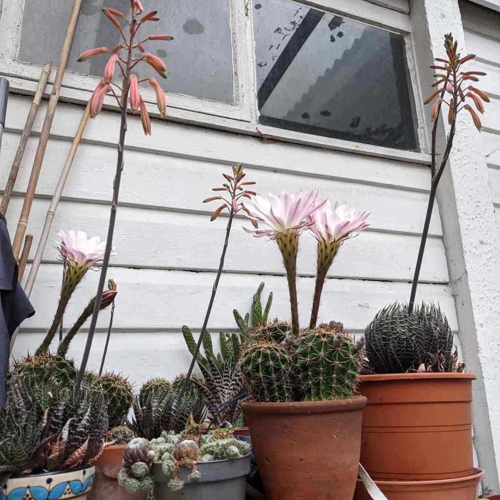 Flowering cactus plants photograph Squeeb Creative