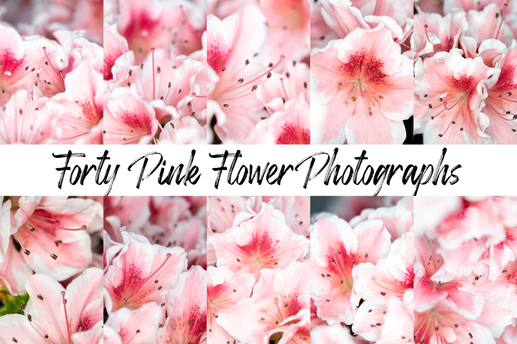 Pretty Pink Flower Photography collection for backgrounds instant download by Squeeb creative