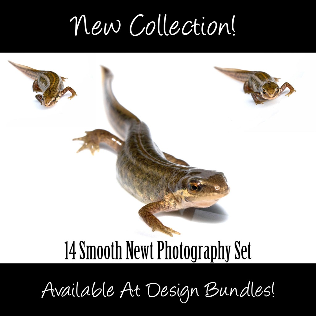Smooth Pond Newt Photography Collection by Squeeb Creative