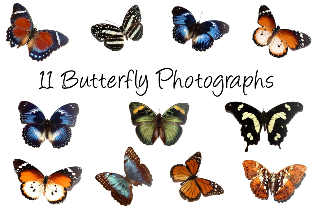 Butterfly Close Up Photograph on White Background Collection Download by Squeeb Creative